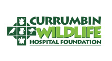 currumbin-wildlife-hospital-foundation